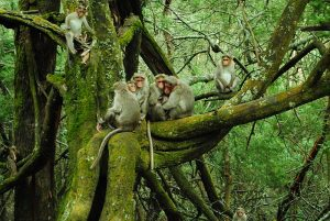 800px-Monkey_family_in_moss_tree