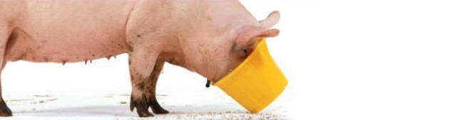 Pig_EOG
